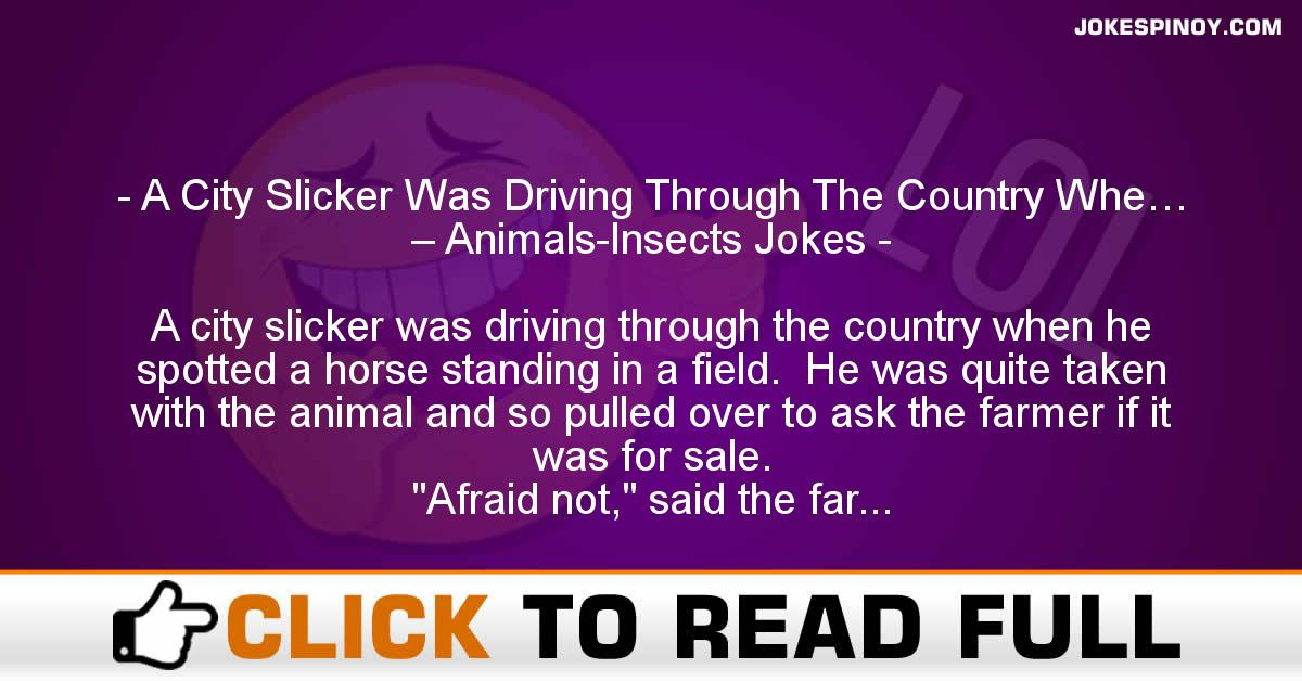 A City Slicker Was Driving Through The Country Whe… – Animals-Insects Jokes