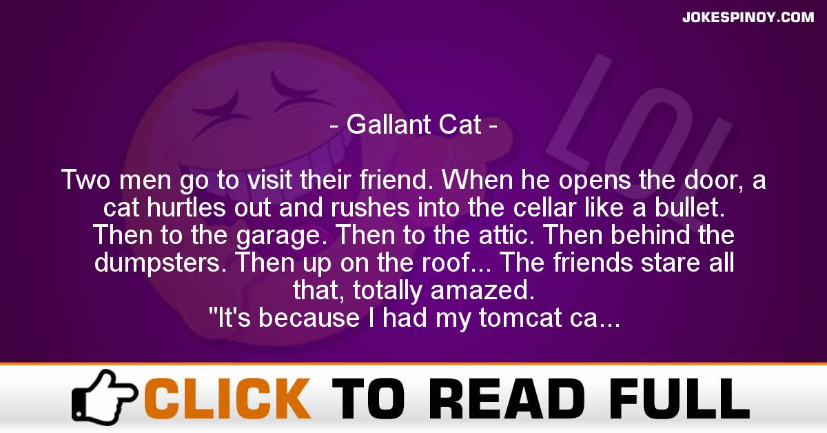 Gallant Cat