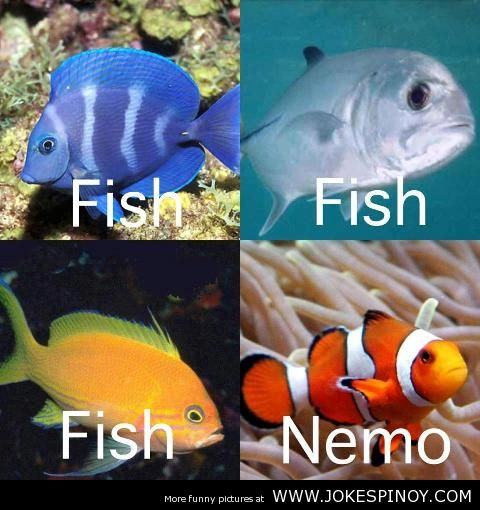 Nemo the new species of fish