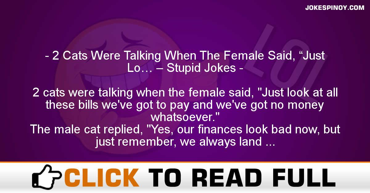 """2 Cats Were Talking When The Female Said, """"Just Lo… – Stupid Jokes"""