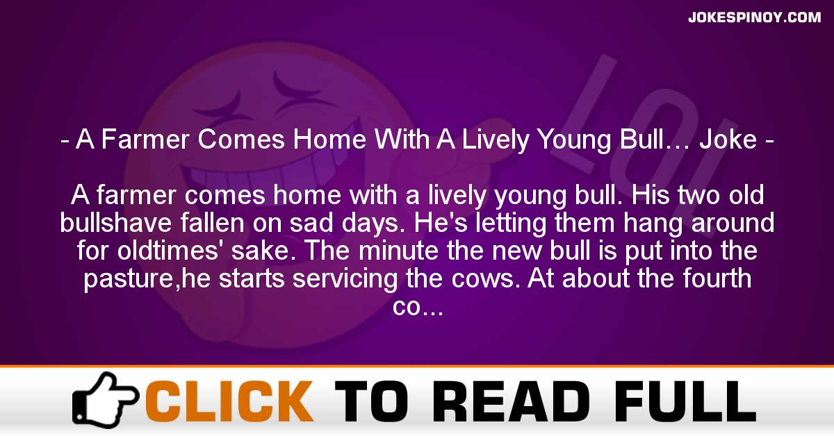 A Farmer Comes Home With A Lively Young Bull… Joke