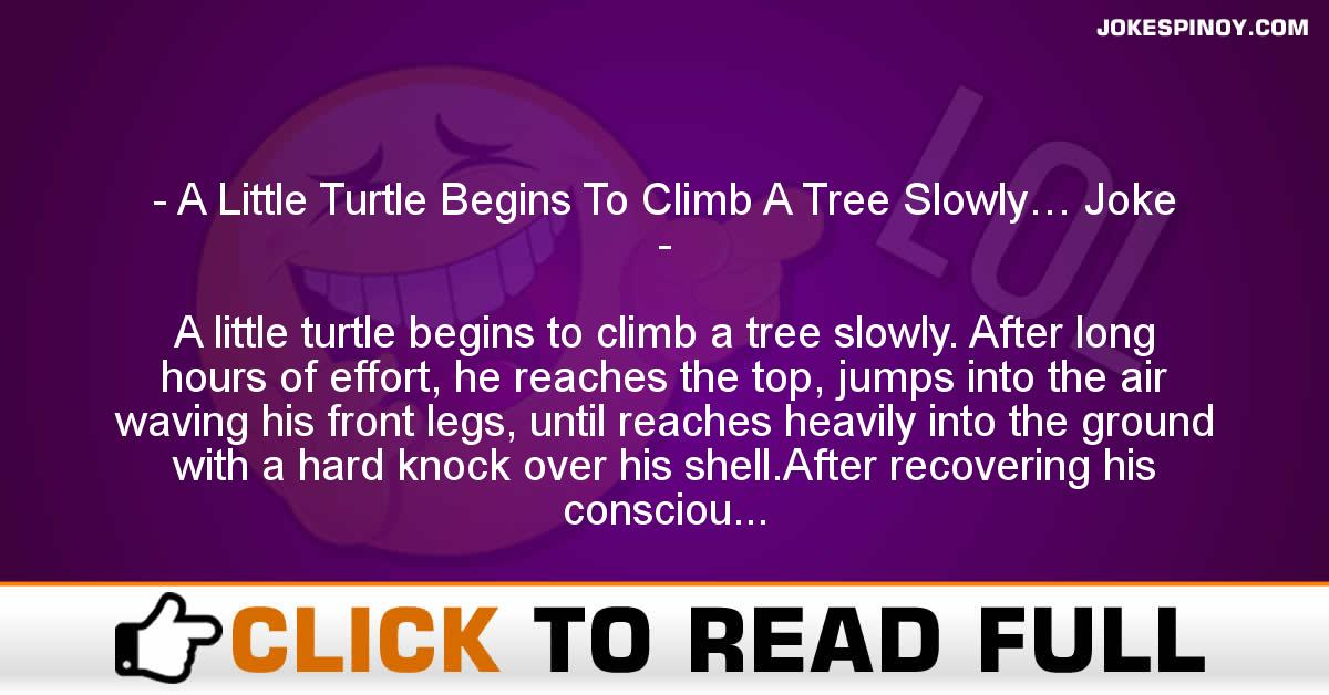 A Little Turtle Begins To Climb A Tree Slowly… Joke