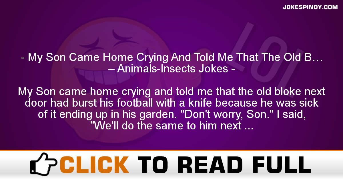 My Son Came Home Crying And Told Me That The Old B… – Animals-Insects Jokes