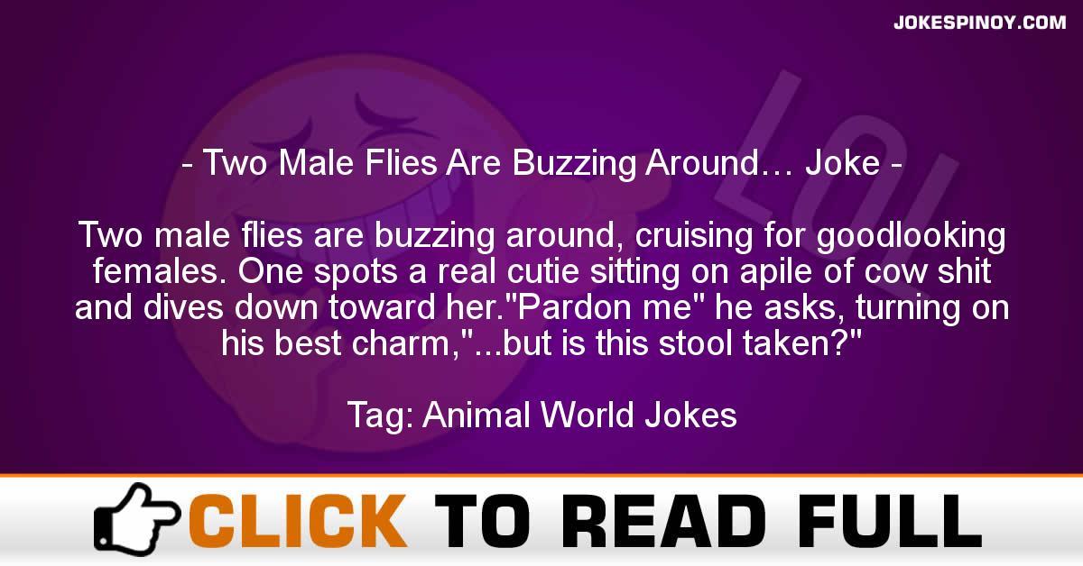 Two Male Flies Are Buzzing Around… Joke
