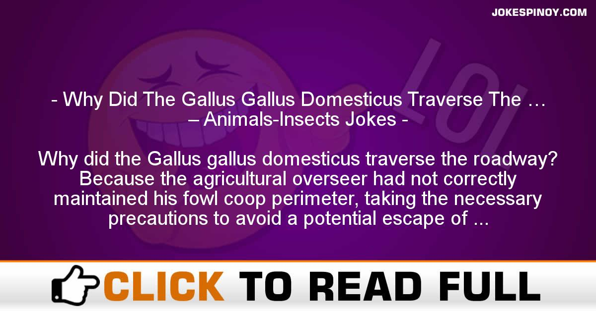 Why Did The Gallus Gallus Domesticus Traverse The … – Animals-Insects Jokes