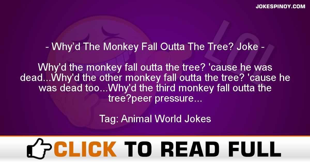 Why'd The Monkey Fall Outta The Tree? Joke