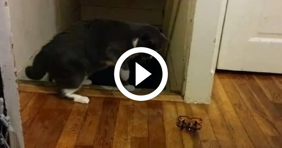 Scaredy Cats Funny Video