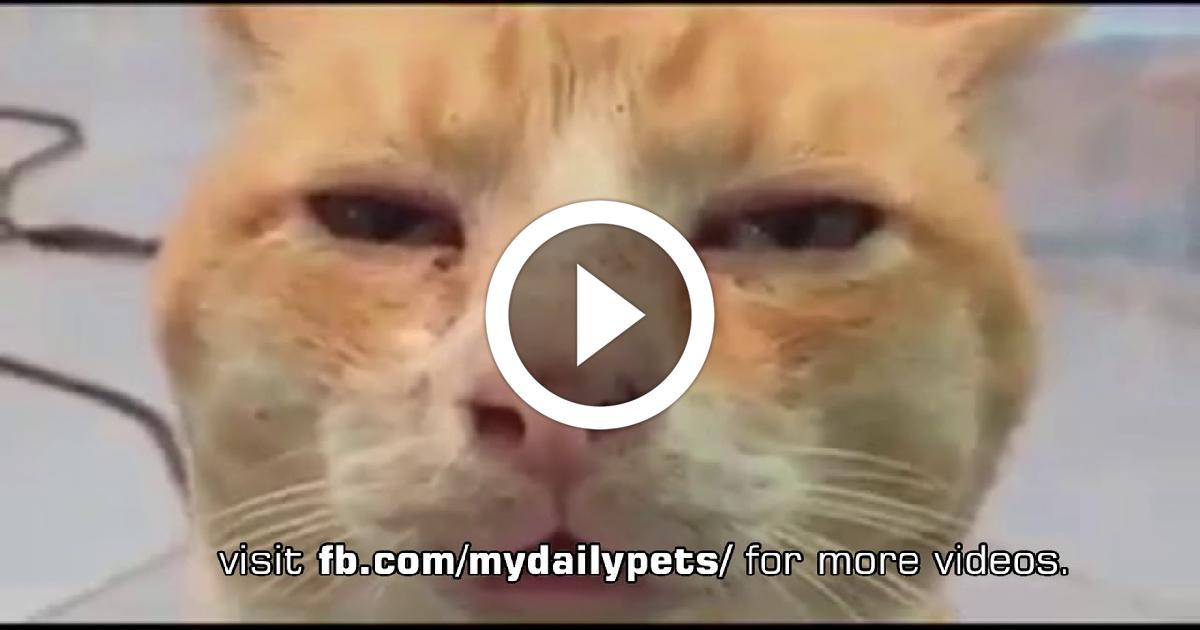 Cat Get High On Weed Funny Video